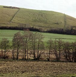 View of the Cerne Giant cut into the chalk, Cerne Giant © National  Trust